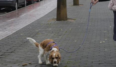 Un gos, just després de defecar, ahir a l'avinguda del Segre.