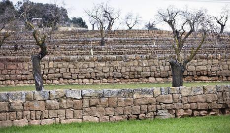 Els murs dels marges de pedra seca de Mas Ramon, Guissona, entre els més ben conservats a la Segarra.