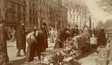 Fotografia antiga que mostra els punts de venda d'ocells a la Rambla de Barcelona.
