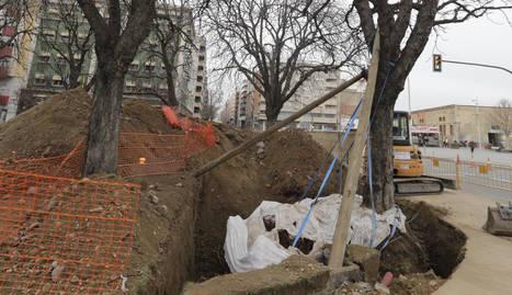 Un dels arbres ja té el voltant de les arrels excavat.