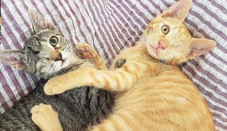 L'associació assumeix també les operacions i les assistències veterinàries dels gats amb problemes de salut.