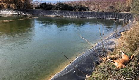 La bassa en què es van ofegar el caçador i els dos gossos.