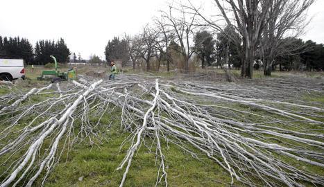 Operaris retiren arbres morts dels terrenys de l'Hípica.