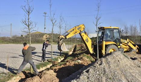 Els treballs per plantar els nous arbres.