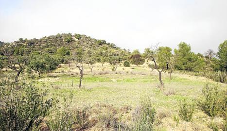Els terrenys on es preveu construir l'abocador de Riba-roja.