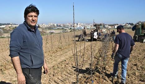Josep M. Brufau, en plena tasca de plantació de les pomeres ecològiques.