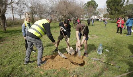Plantada d'arbres per salvar el bosc del carrer Palauet de Lleida