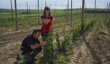 Agricultura aprova ajuts per a 102 joves emprenedors agrícoles a Lleida
