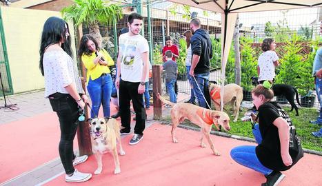 Una jornada d'adopció d'animals a Lleida.