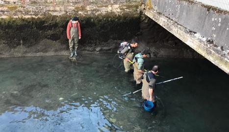 Imatge del rescat dels peixos de la Garona al seu pas per Bossòst.