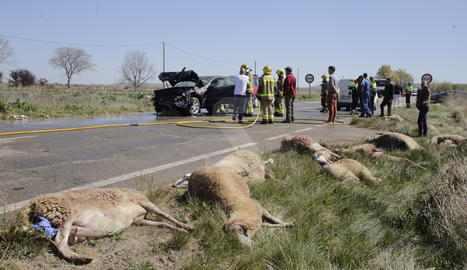 Un ferit en xocar dos cotxes contra un ramat d'ovelles a Puigverd de Lleida