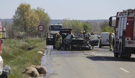 En primer pla dos de les ovelles i al fons, els dos vehicles contra els quals van col·lidir.