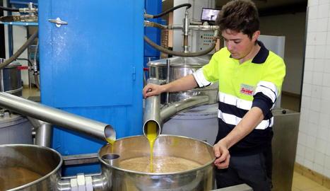 Imatge d'arxiu de producció d'oli verge extra en una cooperativa lleidatana.