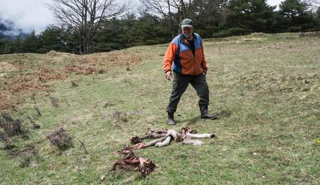 La trampa instal·lada als voltants d'Arres i, a la imatge inferior, Castet amb els ossos del poltre.