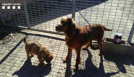Imatge de la gossa i el seu cadell abandonats a Montornès.