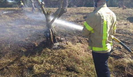 Un incendi calcina 1,6 hectàrees de cultius i oliveres a Albatàrrec