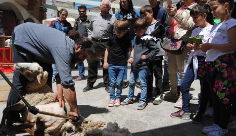 L'esquilador va fer una demostració davant d'un gran nombre de curiosos.