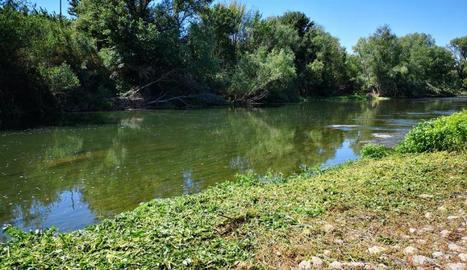 Aitona neteja la llera del riu per habilitar noves zones de pesca recreativa