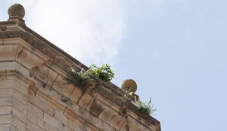 Una de les figueres (a la part lateral), al costat de més vegetació.