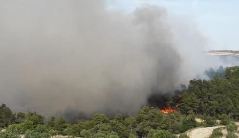 Un incendi crema deu hectàrees de vegetació agrícola i forestal entre Nalec i Rocafort