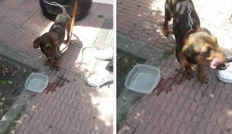 Imatge del gos escapat