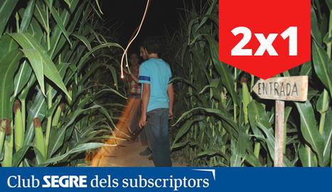 L'entrada al laberint de blat de moro de Castellserà., a l'Urgell.