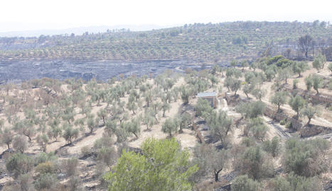 Imatges de l'incendi de la Ribera d'Ebre, que afecta a diversos indrets de les Garrigues i el Segrià