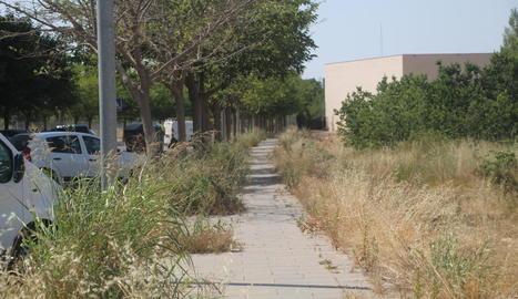 El carrer de Cal Bernet, pres per les males herbes, ahir.