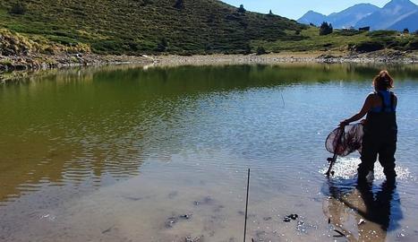 Una de les tècniques revisant les trampes del llac.