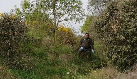 Un agent rural mostra en lloc on van trobar el llebrer.
