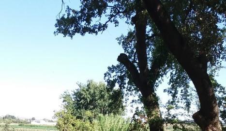 Els arbres dels quals, segons l'afectat, es van tallar les branques.