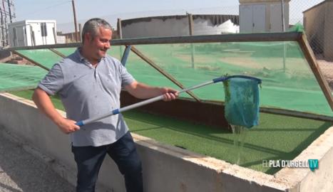 Cultius de llenties d'aigua per frenar l'excedència de purins a Vila-sana