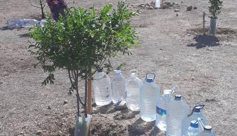 Veïns de la Bordeta reguen arbres del Bosquet del Palauet