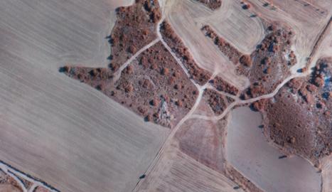 Un estudi demostra que els paisatges agrícoles amb parcel·les petites i variades fomenten la biodiversitat