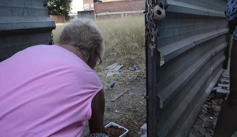 Una voluntària donant menjar ahir als gats d'una colònia de carrer.