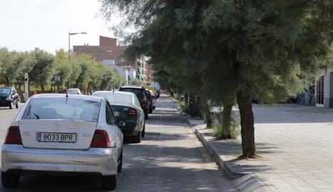 Carril bici 'envaït' per arbres a la Bordeta