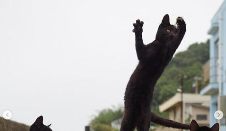 """Gats ninja"" virals"