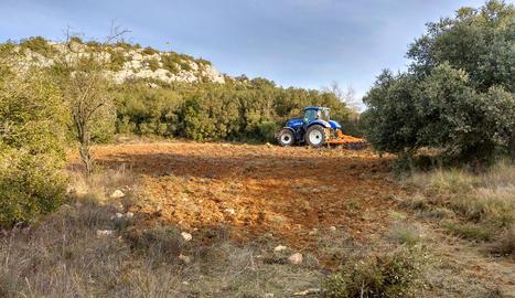 Accions complementàries - S'ha sembrat camps abandonats i recoberts de matolls perquè serveixin d'aliment a espècies presa com perdius i conills.
