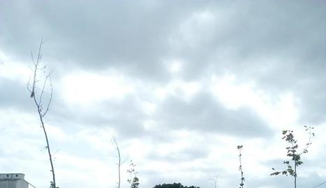 La plataforma Canal Viu va lamentar la mort de part dels arbres.