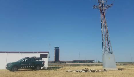 Moren electrocutades una trentena d'aus en una línia propera a l'aeroport d'Alguaire