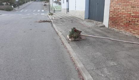 Dos arbres arrancats després de la festa major de Sucs.