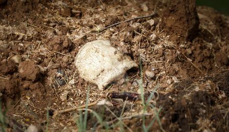 Un crani al costat d'una fossa