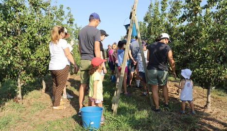 Agricultura preveu una campanya de la fruita amb preus