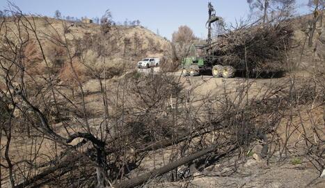 Treballs de neteja en un dels boscos afectats pel gran incendi ahir a Maials.