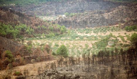 ascó. Des de les finques situades al sud del terme de Llardecans la Central Nuclear és relativament a prop en línia recta. A la foto diverses finques cremades i altres que van salvar-se.