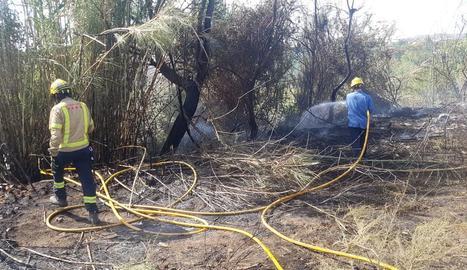 Sufoquen incendis de canyes al Secà i l'avinguda de l'Exèrcit