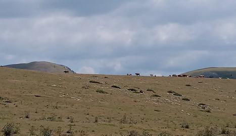 Pastures a Sorre, al Pallars