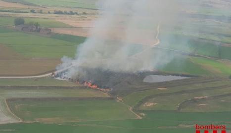Un incendi crema 3 hectàrees d'un camp de pomeres a Alcoletge