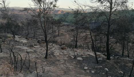 El gran incendi va calcinar unes 500 hectàrees al terme de Maials, d'un total de 5.000.