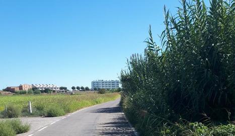 Imatge de la vegetació que envaeix el camí de Vallcalent.